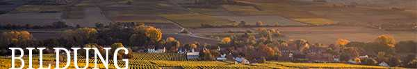 Bildung für Rheinhessen